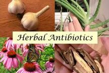Herbs/Spices/Essential Oils / by Lola Boudreaux