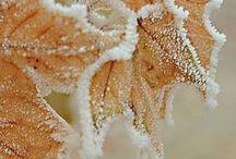 Winter Wonderlands...love it. / by Stephanie Shipley
