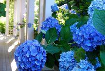 Flowers / by Katie Lewter