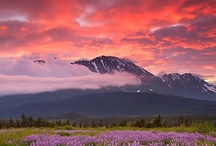Alaska, USA / by Beth Mills Foster