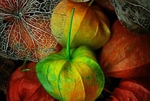 Autumn II / by Beth Mills Foster