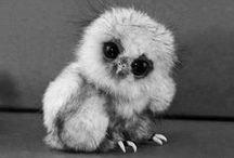 beautography ~ animals {b&w} / by cheri ☪ cheree
