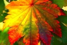 Autumn / The blessings of Autumn   / by Catherine Strange, M.Ed