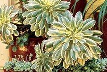 Indoor Plants / by P. Klahr