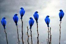 A Bolt  of Blue / by P. Klahr