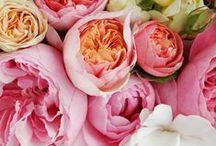 Flowers / by Renée Terheggen