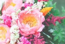 Flowers / by Josephine Kimberling