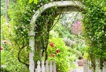 Garden. / by Kaylyn Leigh Braga