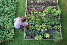 Garden Fresh / Gardening inspiration...trying to keep it organic.  / by MeMe King