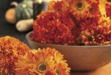 Thanksgiving ideas & recipes / by Lynn Kramer