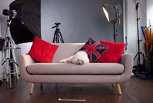 Pets - MADE.COM / Our pieces have been getting the pet seal of approval and we thought it was about time we shared them with you. / by MADE.COM