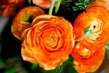 """Bella Flora / """"The Earth laughs in flowers."""" -Ralph Waldo Emerson / by NYC Recessionista"""