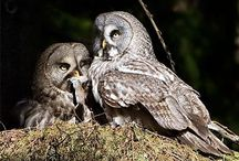 owls, hurrah!! / by Kym Skiles