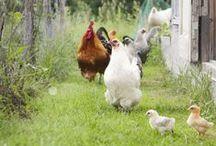 Farm & Garden / by Traci Chamberlain