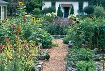 Gardening / by All Crafts Channel By Yolanda Soto Lopez