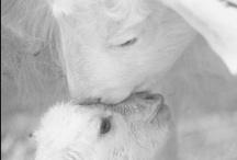 Little Lamb / by Julie Gagnon