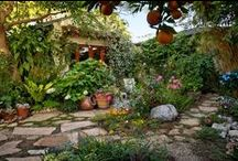Native Landscaping / by Justine Swann