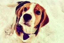 BEAGLE ❤ LOVE /   / by BELLE PINS