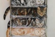 kitty love / by Spinmelody