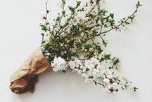 Bloom / by Eliz B. Sarobhasa