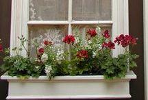 Flower Box Ideas / by Shirley Lawton