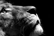 Animals  / by Kelly Davison