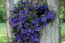 Flowers... / by Denise Linney