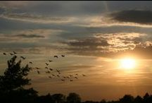 Sunrise, Sunset / Breathtaking views of sunrises and sunsets  / by Melissa Snyder