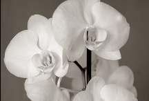 Orchid / by Francolletta