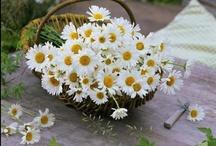 Flowers / by Francolletta