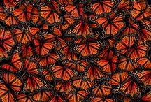 Butterfly ♥ / by Francolletta