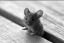 Mouses / by Francolletta