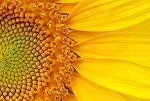 ~ FLOWER POWER ~ / by Snow Blackerby