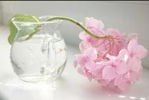 Hydrangeas with love / by Francolletta