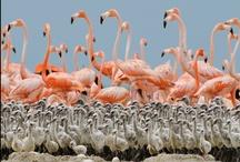 Flamingo / by Francolletta