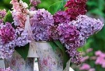 violet / violet / by Tightwad Blog