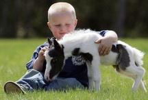Children Love Animals 1 / by Stacy G. F.