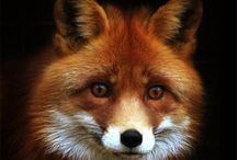 Animals-Woodland 1 / by Stacy G. F.