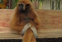 Monkey Business/Apes 3* / by Stacy G. F.