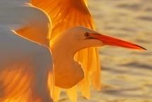 "Birds / Birds, Various types of birds / by Theresa ""Tess"" Engelhardt"