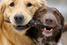 Doggies--besides Dachsies at least! / by Debbie Willey