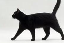 CAT / by Cobra Schneider