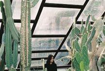 Plantas y flores / by Natalia B