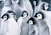 penguin theme / by Terria Ashby