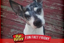 Furry Facts / by Pup-Peroni®