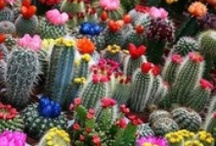 Desert Garden / by Jill Prine-Fisher