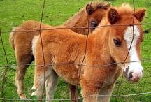 "Horsing Around ~ Mini's / ""Horses make a landscape look beautiful.""  ~ Alice Walker  / by spectrumdaze"