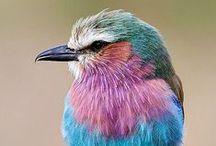 KLEURINSPIRATIE ✽ Vogels en Veren   Birds and Feathers / De mooiste kleuren komen uit de natuur. Laat je inspireren door de meest bijzondere vogels en hun verrassende kleurcombinaties en pas deze kleuren toe in je interieur! Ik help je graag met een kleuradvies op maat. Kijk op www.stijlidee.nl en vraag vrijblijvend een offerte aan via info@stijlidee.nl  / by STIJLIDEE Interieuradvies en Styling
