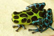 KLEURINSPIRATIE ✽ Kikkers   Frogs / De mooiste kleuren komen uit de natuur. Laat je inspireren door de meest bijzondere kikkers en hun verrassende kleurcombinaties en pas deze kleuren toe in je interieur! Ik help je graag met een kleuradvies op maat. Kijk op www.stijlidee.nl en vraag vrijblijvend een offerte aan via info@stijlidee.nl  / by STIJLIDEE Interieuradvies en Styling