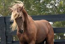 Horses :) / by Danielle Ouellette